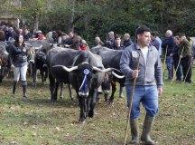 141109-feria-ganado-arenas-049