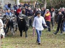 141109-feria-ganado-arenas-067