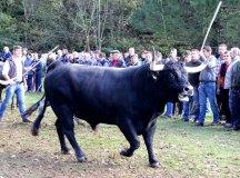 141109-feria-ganado-arenas-152
