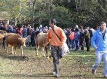 141109-feria-ganado-arenas-193
