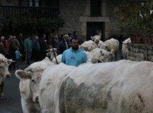 141115-feria-ganado-cieza-059