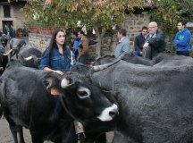 141115-feria-ganado-cieza-094