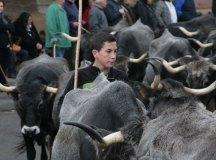 141115-feria-ganado-cieza-099