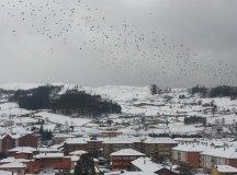150204-nevada-comarca-27-pajaros