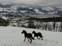 150204-nevada-comarca-66-caballos-la-cuesta-lobao