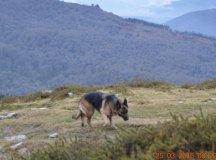 160325-trail-tejas-dobra-las-cercas-011