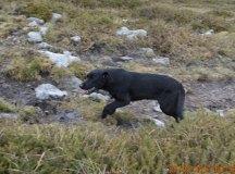 160325-trail-tejas-dobra-las-cercas-069