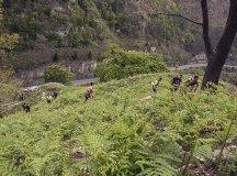 160508-trail-monte-brazo-sc-365