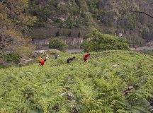 160508-trail-monte-brazo-sc-366