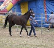 170910-carrera-caballos-molledo-005