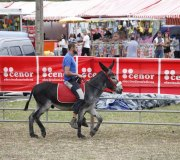 170910-carrera-caballos-molledo-006
