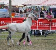 170910-carrera-caballos-molledo-011