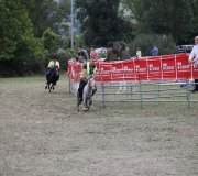 170910-carrera-caballos-molledo-013