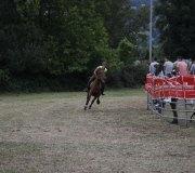 170910-carrera-caballos-molledo-020