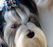 170910-exposicion-canina-san-felices-019