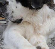 170910-exposicion-canina-san-felices-031