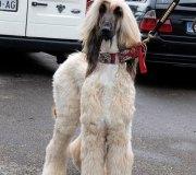 170910-exposicion-canina-san-felices-033