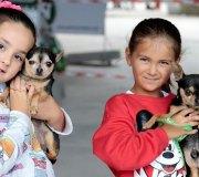 170910-exposicion-canina-san-felices-040