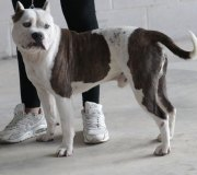 170910-exposicion-canina-san-felices-046