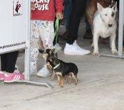170910-exposicion-canina-san-felices-063