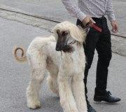 170910-exposicion-canina-san-felices-064