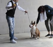 170910-exposicion-canina-san-felices-077