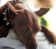 170910-exposicion-canina-san-felices-080