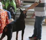 170910-exposicion-canina-san-felices-081