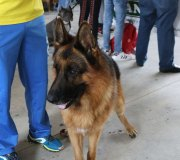 170910-exposicion-canina-san-felices-089