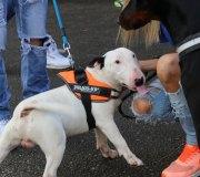 170910-exposicion-canina-san-felices-099