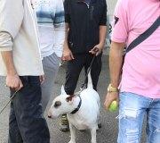 170910-exposicion-canina-san-felices-100