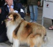 170910-exposicion-canina-san-felices-113