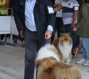 170910-exposicion-canina-san-felices-115