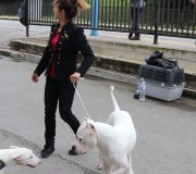 170910-exposicion-canina-san-felices-124