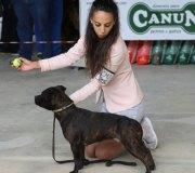 170910-exposicion-canina-san-felices-126