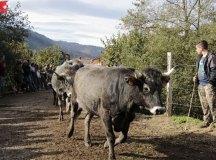 181103-feria-ganado-cieza-066