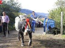 181103-feria-ganado-cieza-154