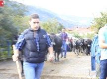 181103-feria-ganado-cieza-202