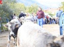 181103-feria-ganado-cieza-208